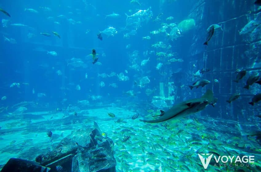 aquarium-atlantis-the-palm