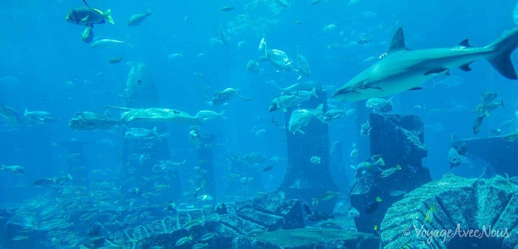que faire a dubai - atlantis aquarium