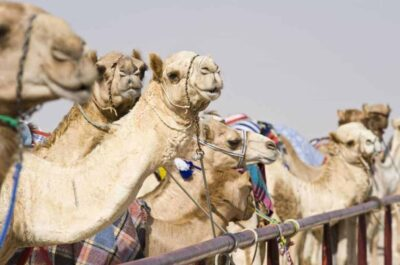 voyager-au-maroc