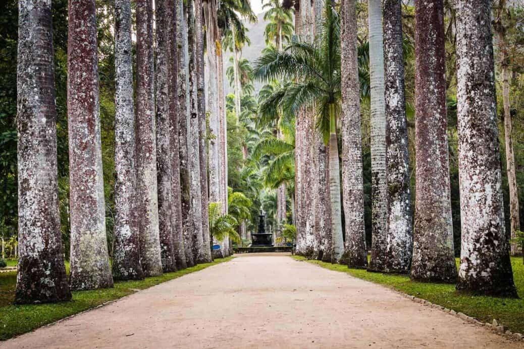 jardin-botanique-rio-de-janeiro