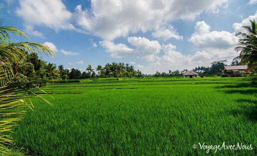 rizieres-ubud-bali