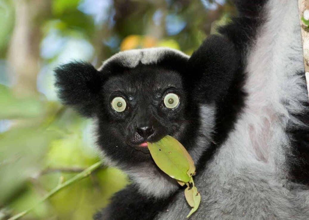 Andasibe-Mantadia-Madagascar