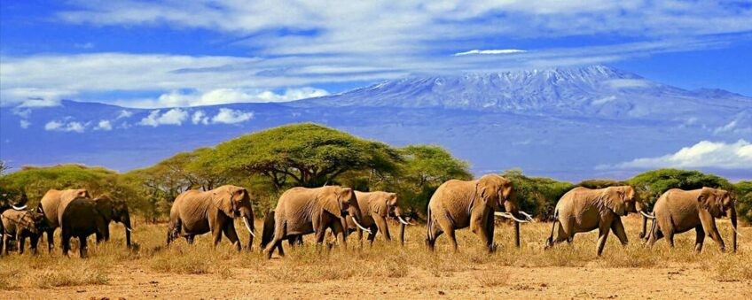 kilimandjaro-serengeti