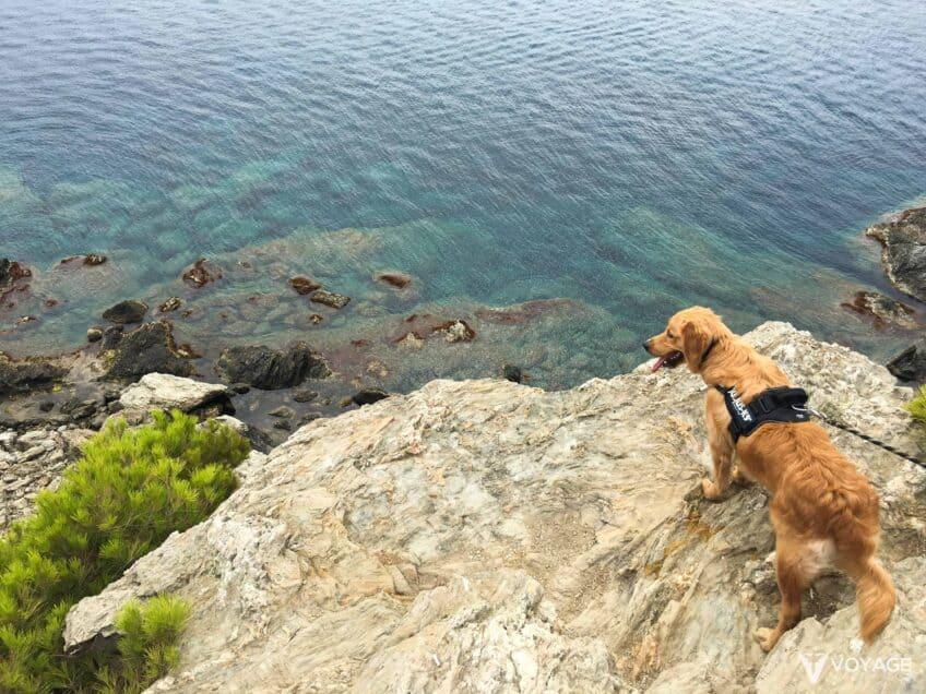 chien-plage-callanques