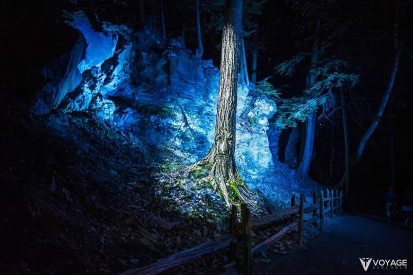 foresta-lumina-quebec