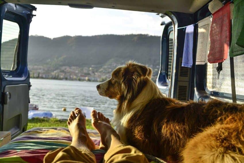 voyage-avec-son-chien