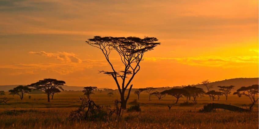 afrique-du-sud