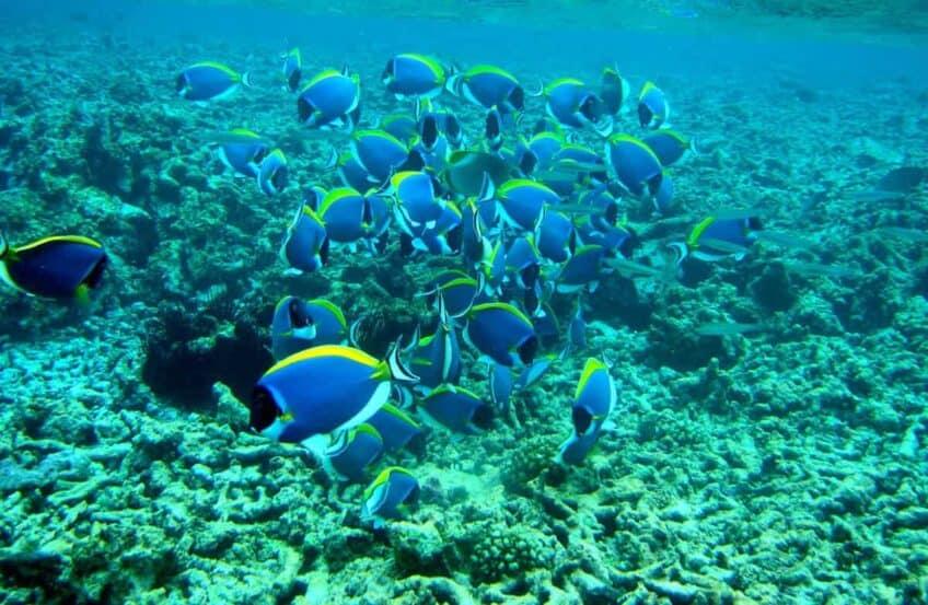 poissons-seychelles