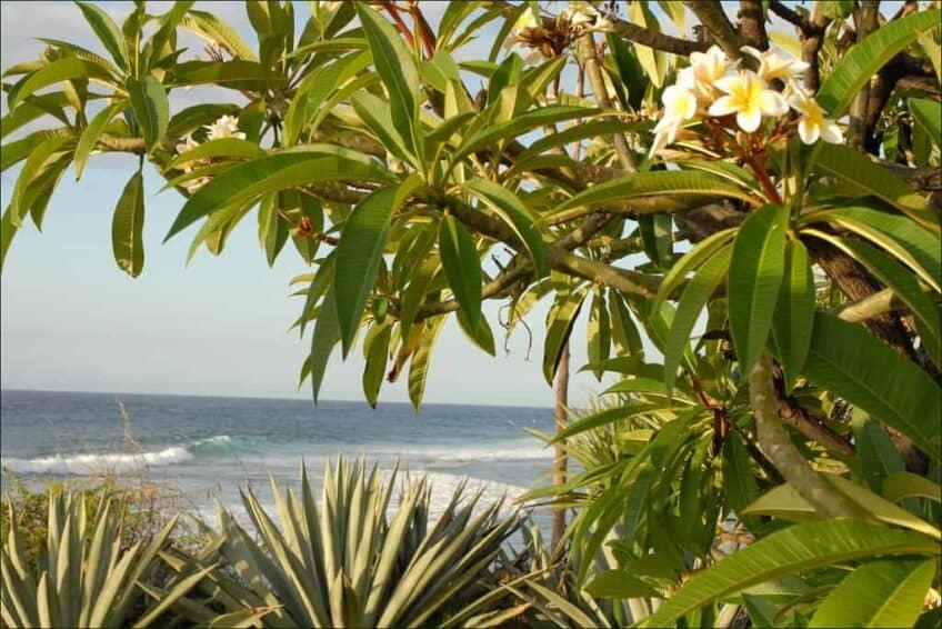 Paysage de l'île de la Réunion