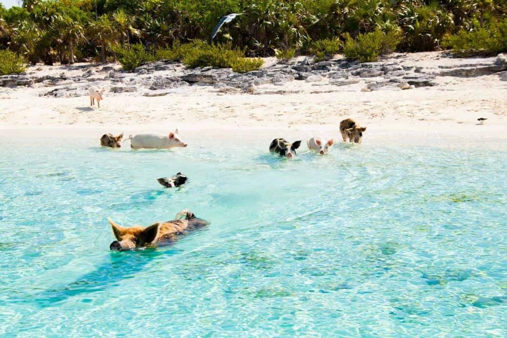 bahamas miami