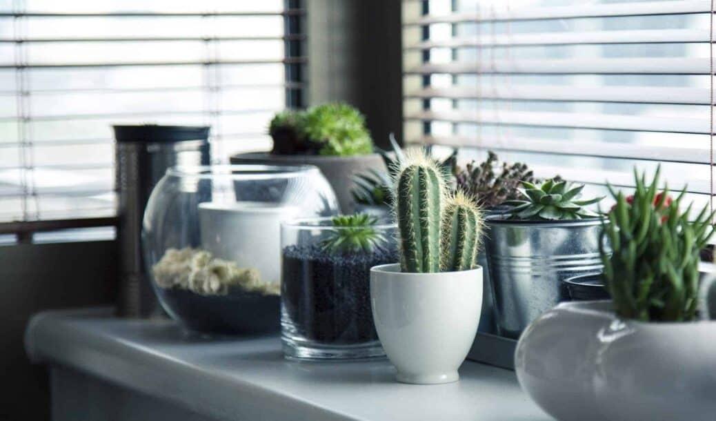 acheter une plante exotique