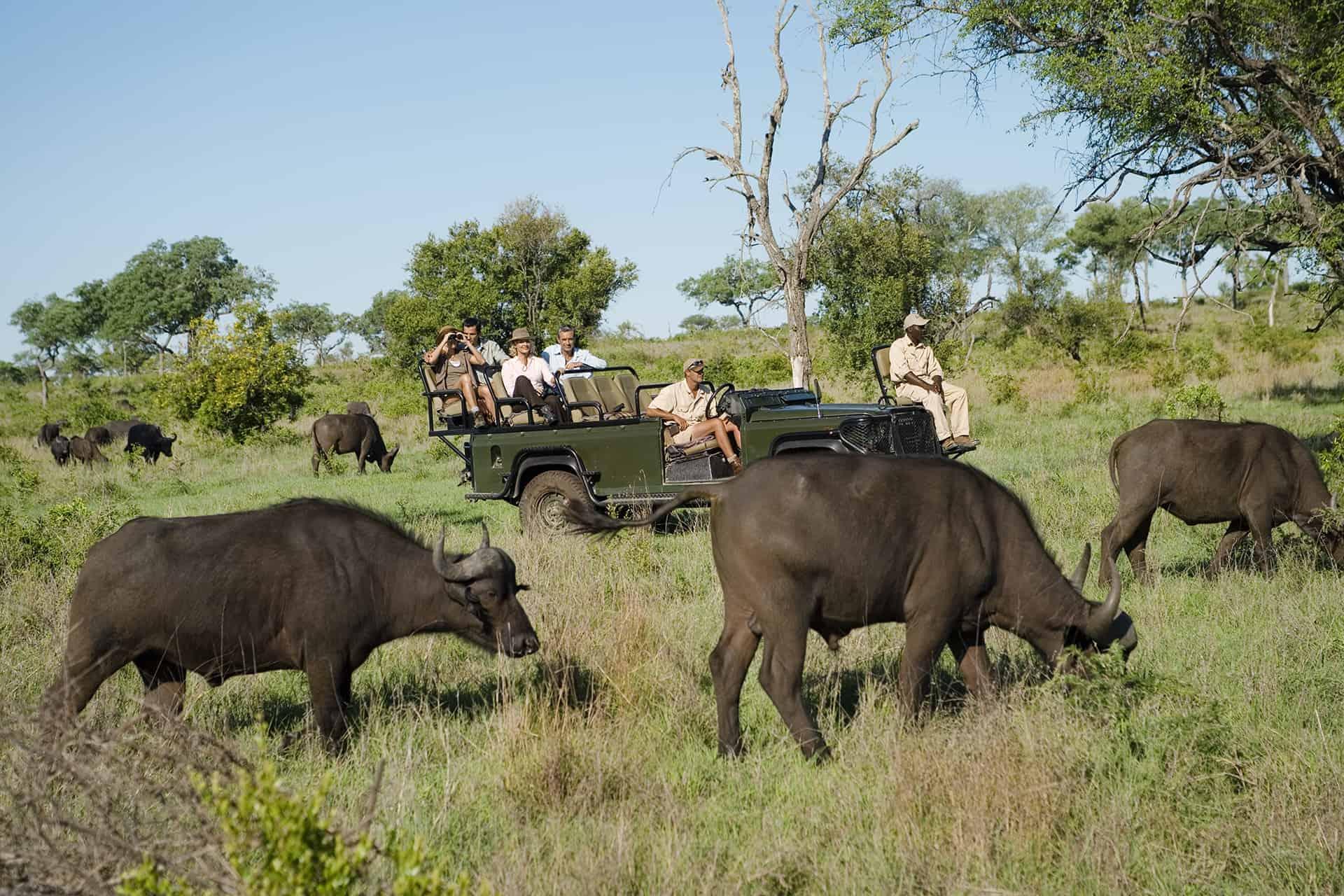 safari avec une agence locale
