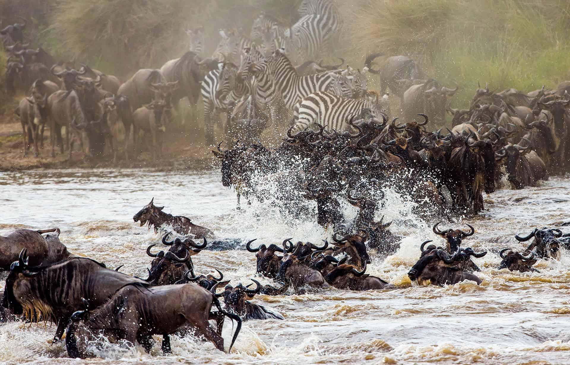 parc national masai mara
