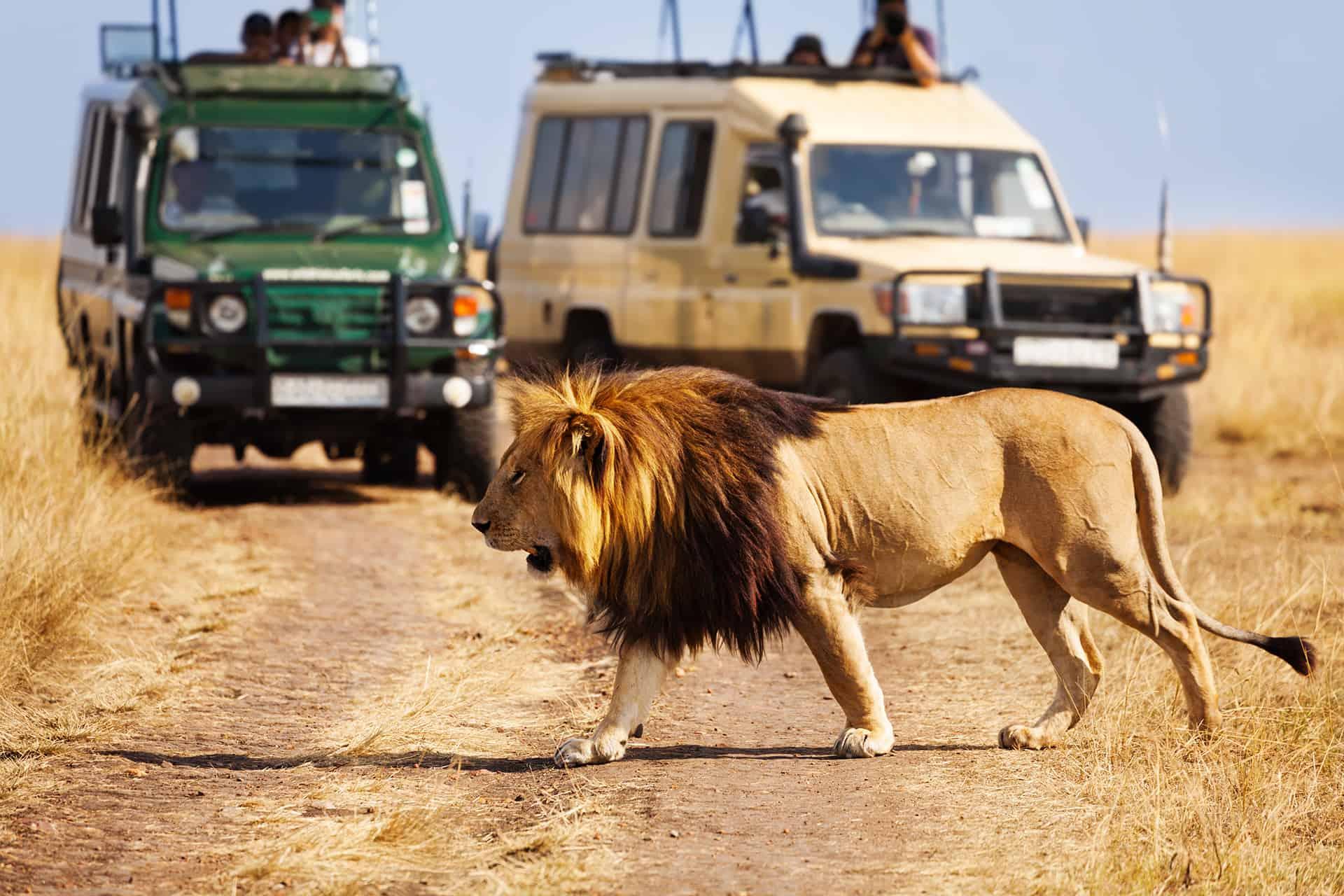 safari avec agence locale kenya