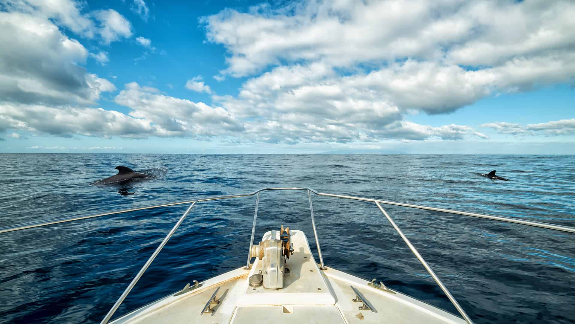baleines pilotes tenerife