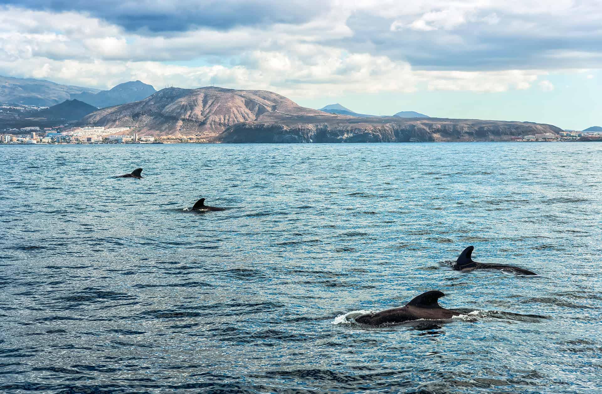 excursion baleines tenerife