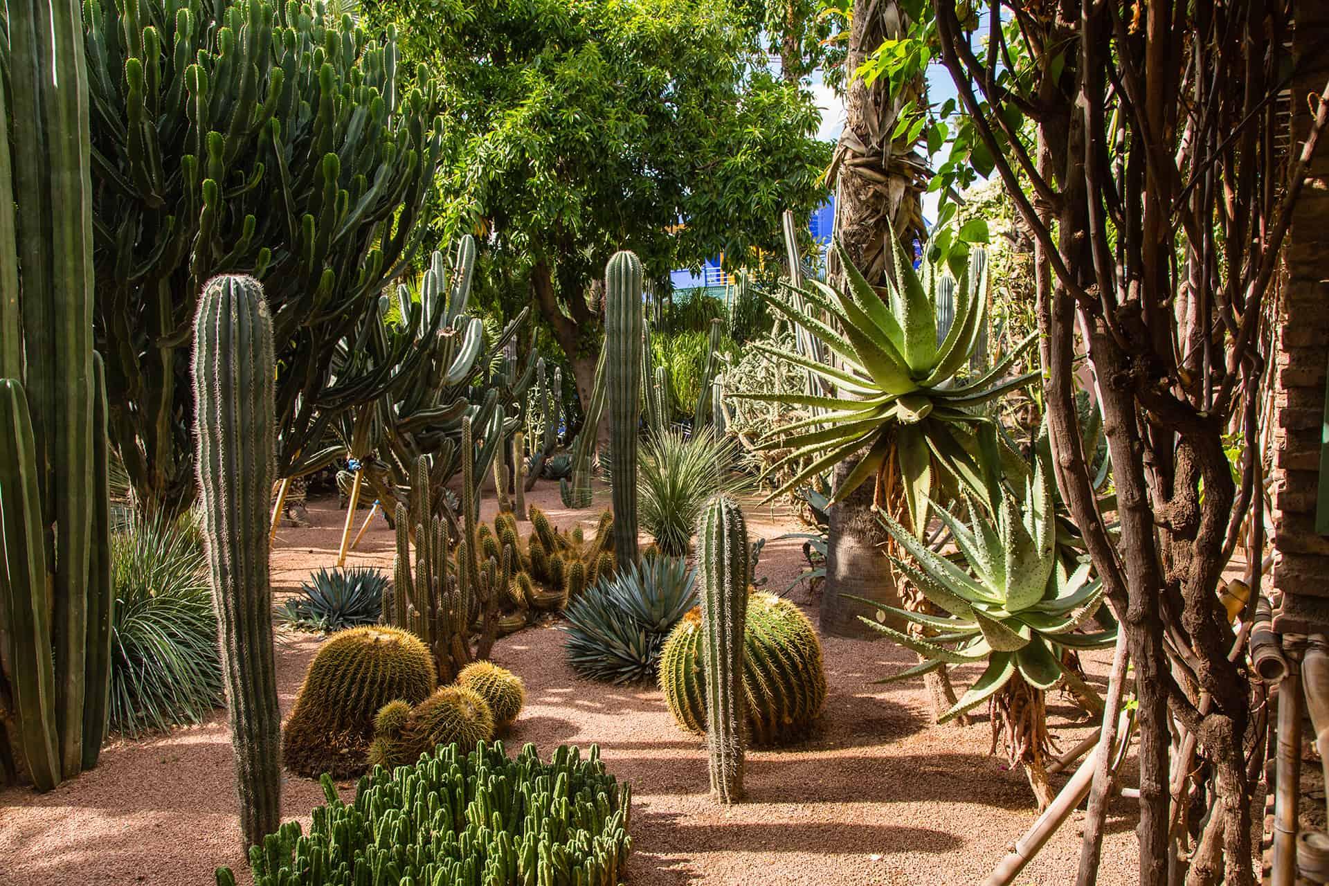 foret cactus marrakech