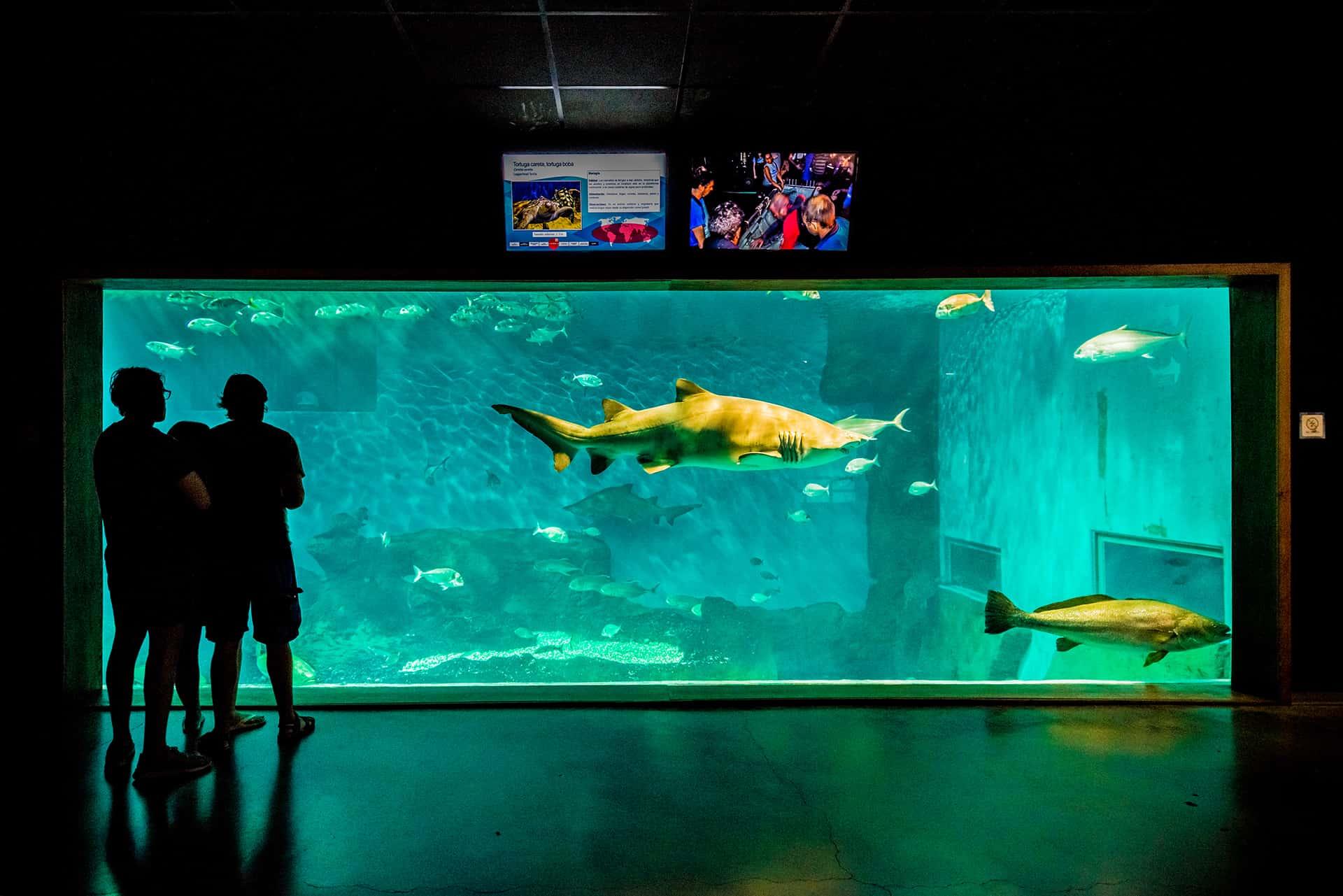 aquarium seville