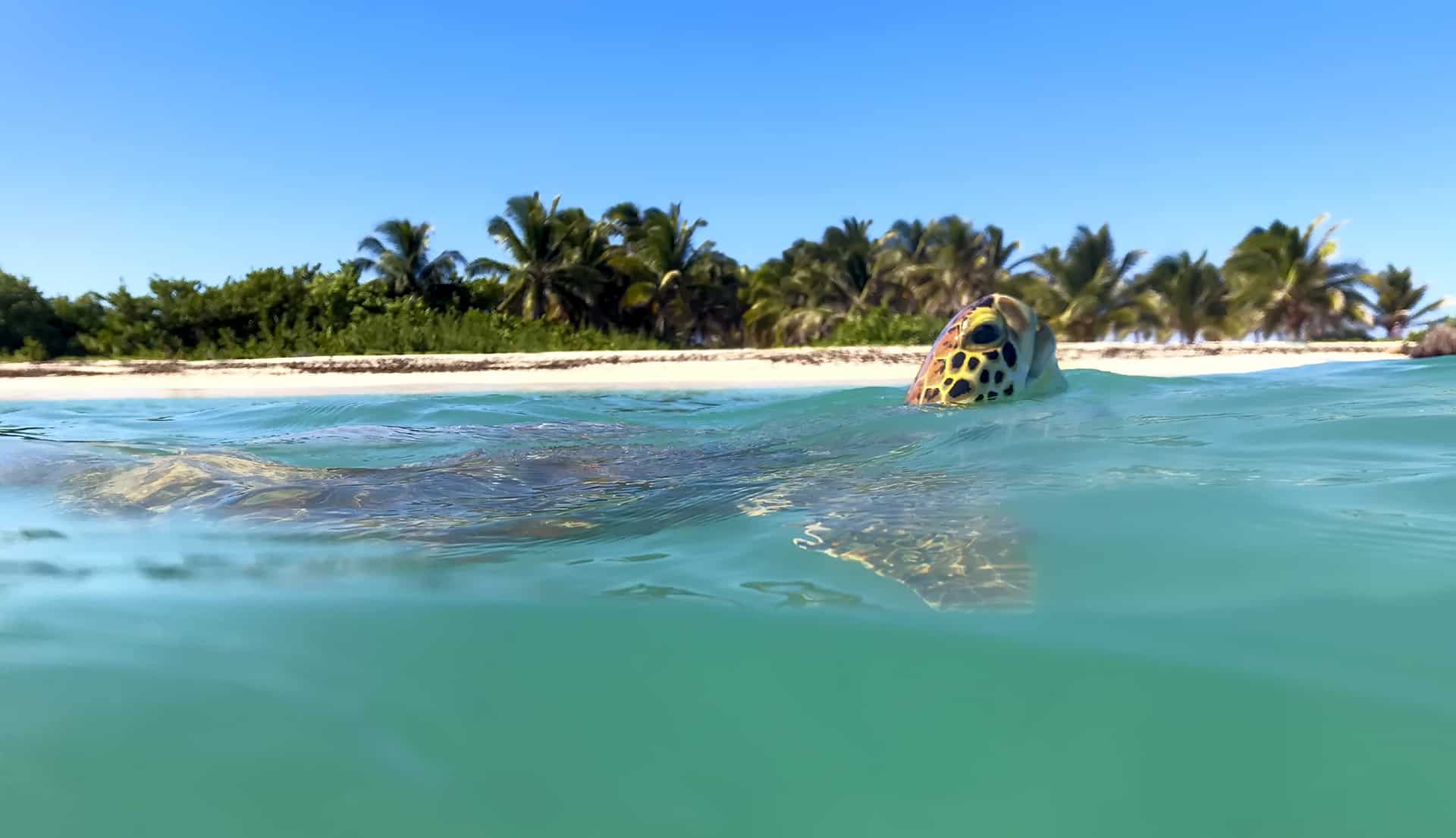 nager avec tortues guadeloupe