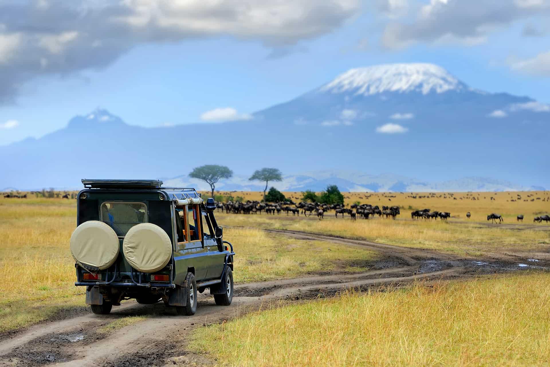 safari kenya ou tanzanie