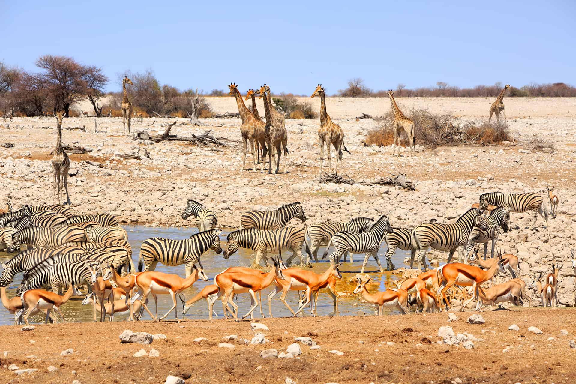 meilleure periode pour safari