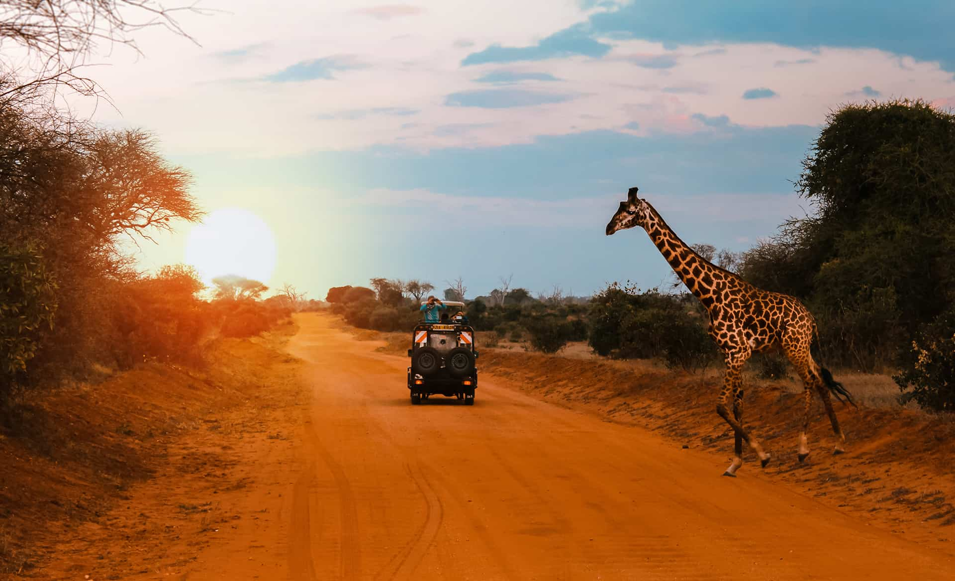 safari avec animaux
