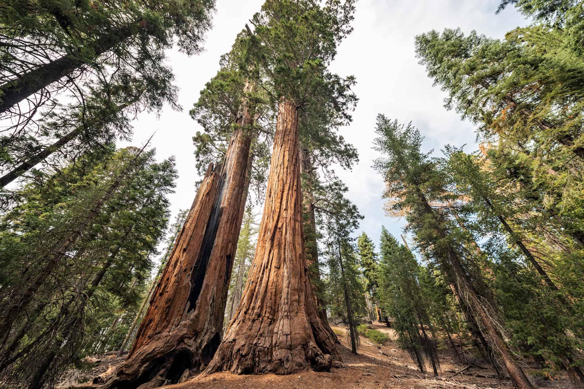 parc sequoia
